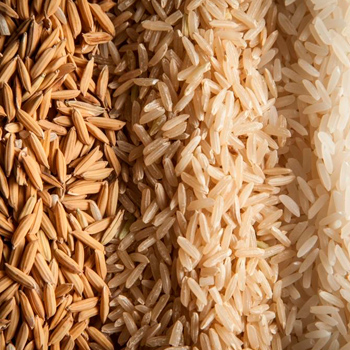 LGBR--Long-Grain-Brown-Rice