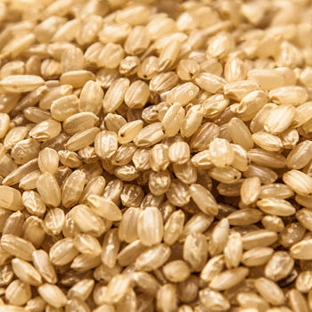 SGBR--short-grain-Brown-rice