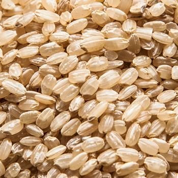 SGBR--short-grain-Brown-rice2